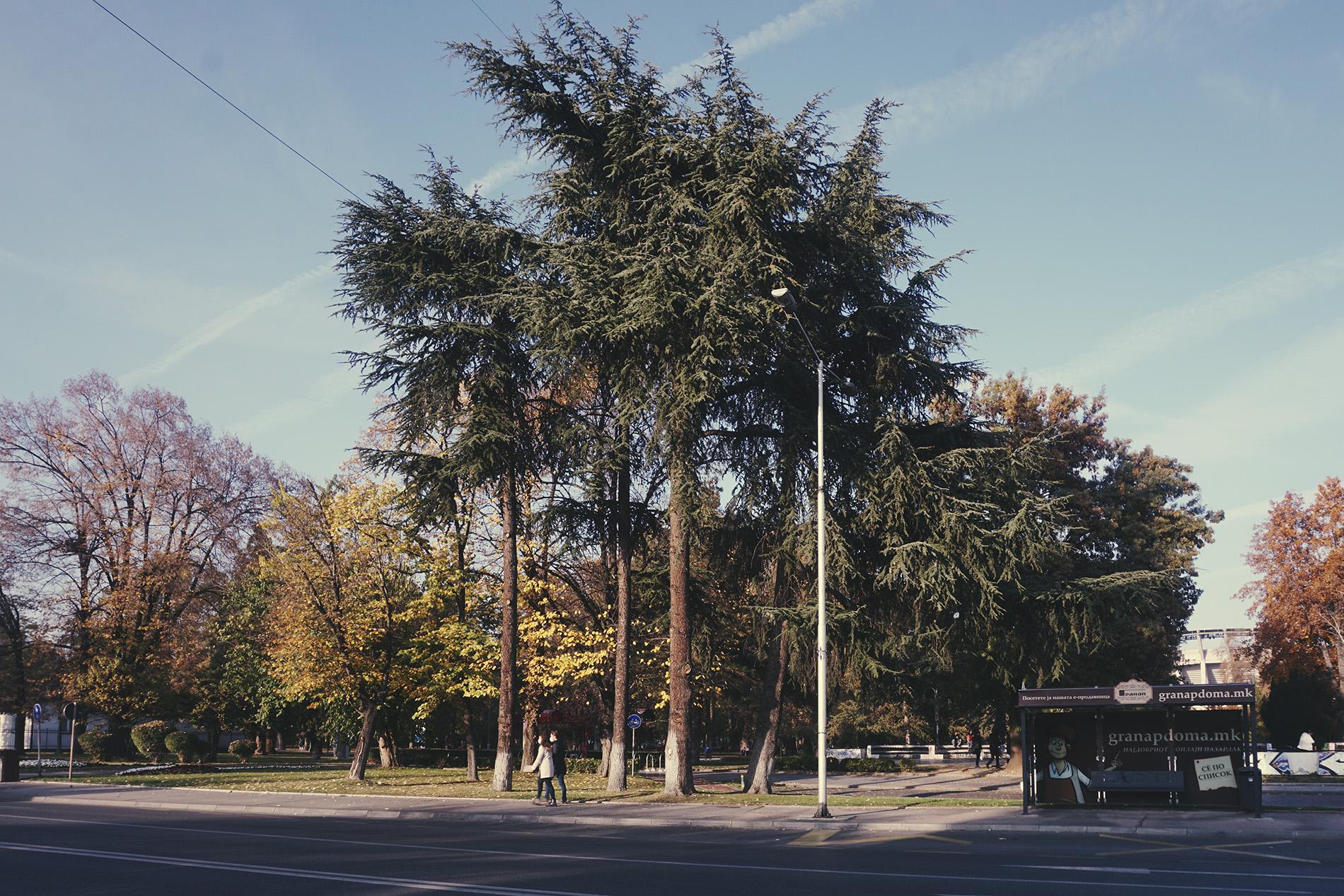Oliver Musovik - Urban Forests, 2020